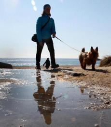 Lindsay Hopkins-Weld and her dog, Harpo, walked along a Manchester-by-the-Sea beach.